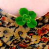 Four Leaf Clover Picture Poem