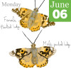 Painted Lady Butterfly Illustration for 30 Days Wild