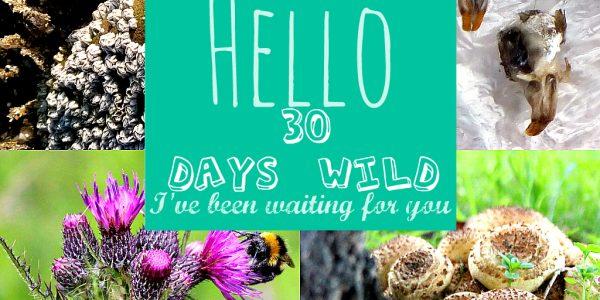 30 Days Wild 2019