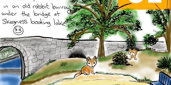 Baby Foxes Illustration