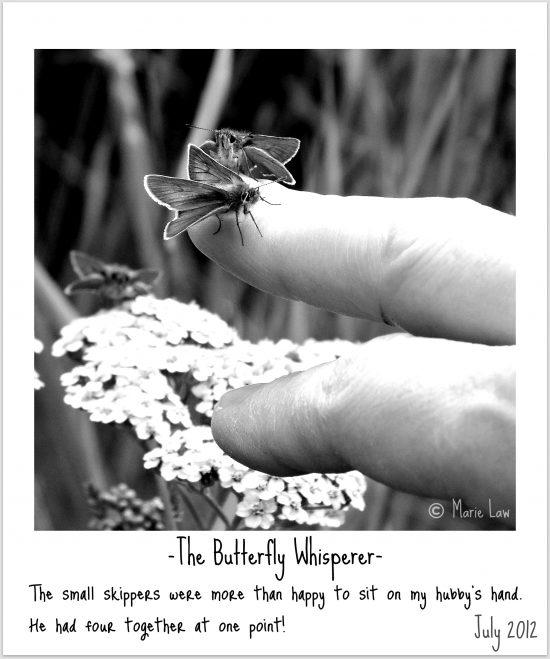 Skipper Butterfly Image