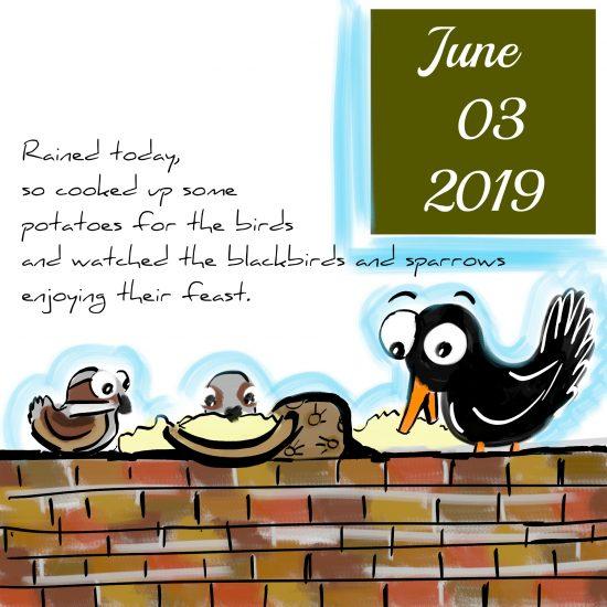 Blackbirds Eating Baked Potato