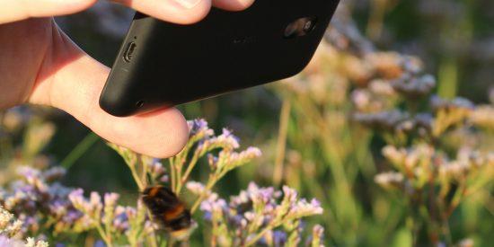 Bumblebee and Smartphone