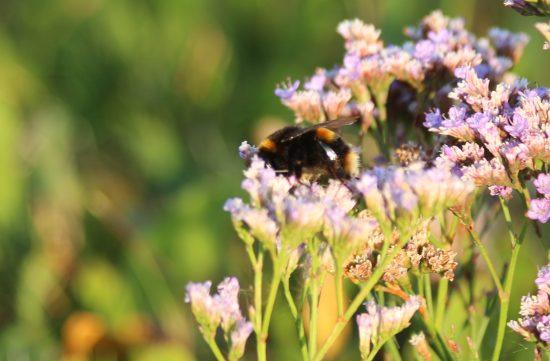 Bumblebee Pollen Basket