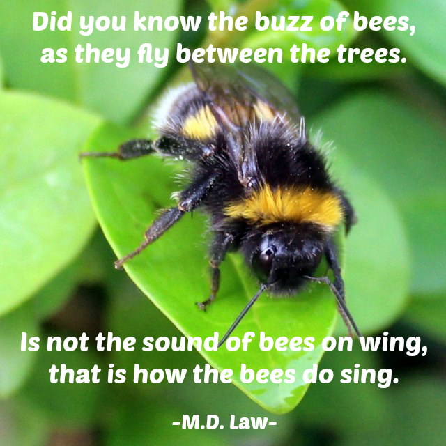 Buzz of Bees Poem