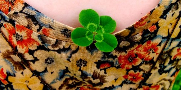 Clover Four Leaf Photograph