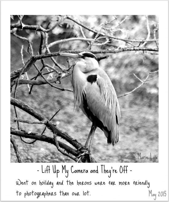 Heron Bird Photography