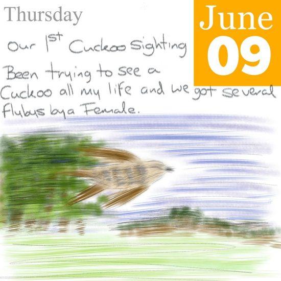 Cuckoo Illustration