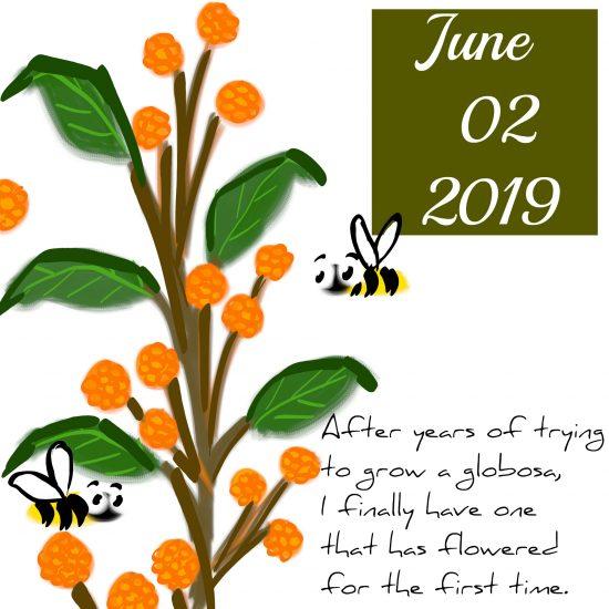Orange Globosa Butterfly Bush