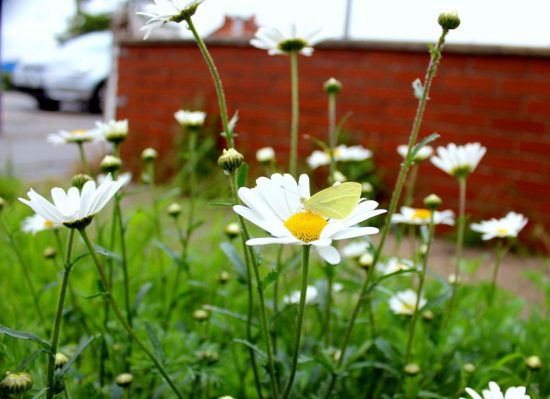 White Butterfly Garden Photograph