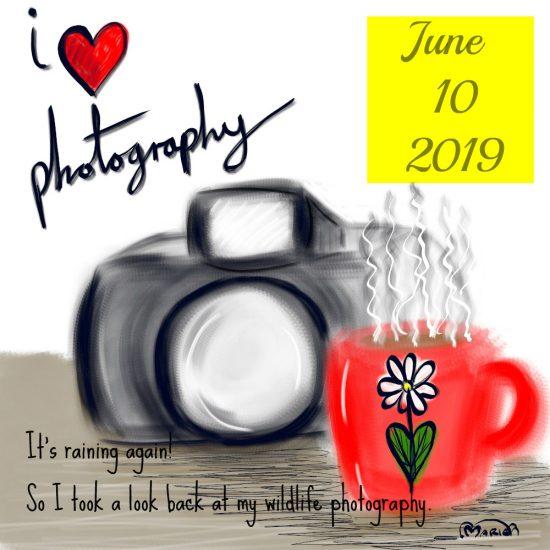 Wildlife Photography 30 Days Wild